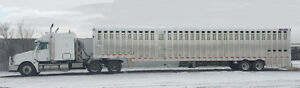 Custom Cattle Hauling  !   Pasture Hauls    53' ground load.