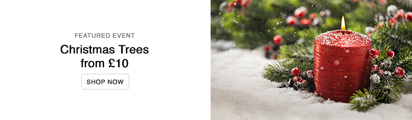 Christmas Trees from £10