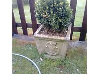 stone garden planter with box plant