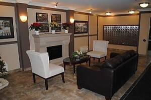 Welcome Home - 1 Bedroom  New Downtown Apartment London Ontario image 6