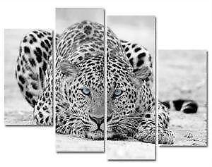 Leopard Wall Decor leopard decor | ebay