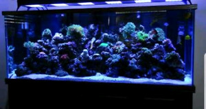 live rock for  aquarium