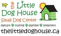 DOG DAYCARE, TRAINING, SOCIALIZATION, PLAYGROUPS