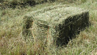 **HAY FOR SALE ** PREMIUM HORSE QUALITY HAY OFF THE FIELD