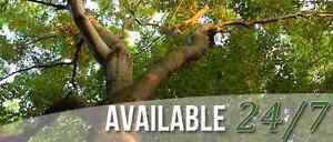 705 TREE SOLUTIONS FREE ESTIMATES CALL OR TEXT  705-796-0433 Kawartha Lakes Peterborough Area image 4