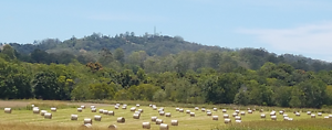 LARGE 4x4 ROUND SORGHUM HAY BALES FOR SALE - FRESHLY CUT Eumundi Noosa Area Preview