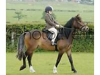 Companion/project 14HH reg NF pony