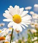 daisy412109