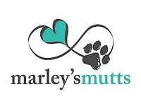 Marley's Mutts Dog Training