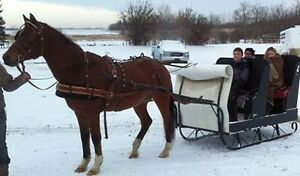 Sleigh seats 4-5 people for single horse