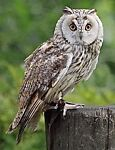 Wise Owl Collectibles