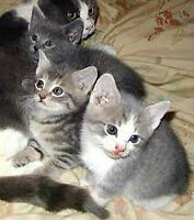 KITTENS and CATS FOR SALE