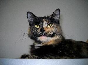 "Young Female Cat - Tortoiseshell: ""Boubou"""