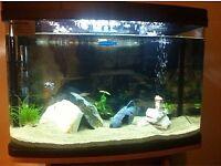 64 Litre Panorama Fish Tank