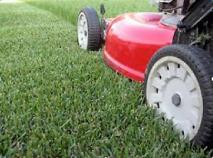 GRASS CUTTING AND TRIMMING SERVICES
