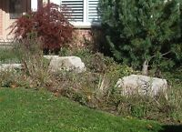 Fall Clean Up - Full Yard Services - Quality & Affordable Prices