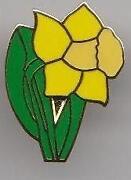 Daffodil Pin Badge