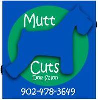 Mutt Cuts Dog Salon Seeking a BATHER/GROOMING ASSISTANT