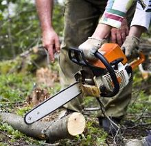 Affordable Tree Removal Service! Maida Vale Kalamunda Area Preview