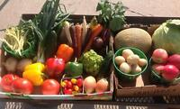 Fruit and Vegetable CSA (community supported agriculture) Shares