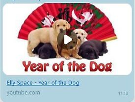 Elly Space: Year of the Dog (MP3) - Asia inspired Music