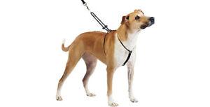 Harnais de sécurité/ Dog Harnesses / Dog Collars and Boots