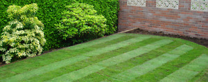 Blue grass sod for sale
