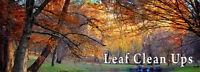 Fall Clean Up, De Thatching Raking, Leaf Blowing, Gardening