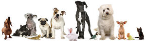 Professional Pet sitting for short or long time boarding
