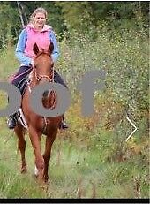 Athletic thoroughbred mare for sale