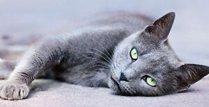 Garde chats à LAVAL