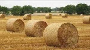 Straw Bales/Round