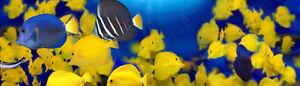 TheReefers New Brunswick Region - Aquarium Hobbiest's Group
