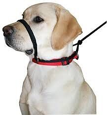 Sporn Head control Halti collar Inglewood Stirling Area Preview