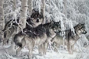 Picture of wolves