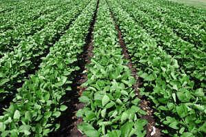 RECHERCHE TERRE AGRICOLE/ LOOKING FOR FARMLAND