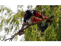 experienced tree surgeons and gardeners