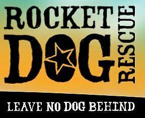 Rocket Dog Rescue