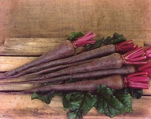 Exhibition Vegetable - Robinsons Beetroot Mammoth Long - 50 Seeds