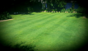 Same day lawn mowing Melville Melville Area Preview