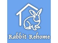 Two adorable rabbits looking for a home!