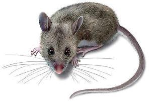 MOUSE, RAT, COCKROACH, ANTS DEAD GONE!