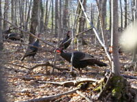 Turkey season is Around the Corner - Get your Map