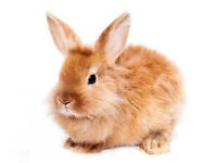*3 SMALL RABBITS FOR SALE*