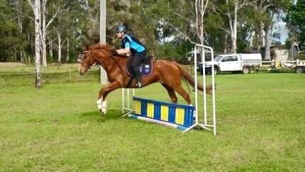 WBXTB Mare 5yo Pimpama Gold Coast North Preview