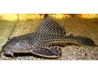 Car fish for sale £10 take ASAP