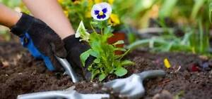 Gardening Services Perth Perth City Area Preview
