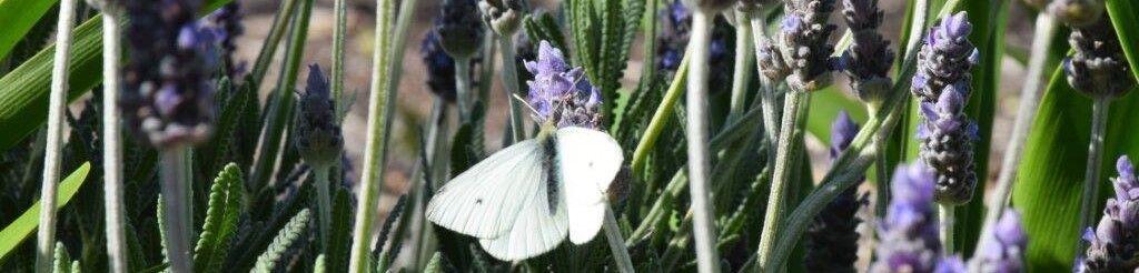 Barossa Aromatherapy