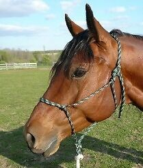 Rope Halters - all sizes from Mini to Draft