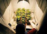 Grow your own medical marijuana